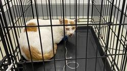 車に跳ねられた猫を保護しました。治療費のご支援をお願いします。