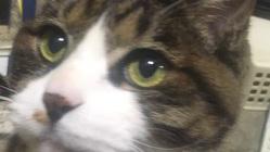 飼い猫のニャン太をリンパ腫から救ってください