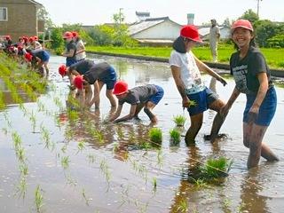 宮崎県綾町で無農薬天日干しの米作り!リスク分散型の農業を実践