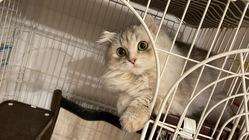 猫伝染性腹膜炎(FIP)の治療にご支援、ご協力をお願いいたします