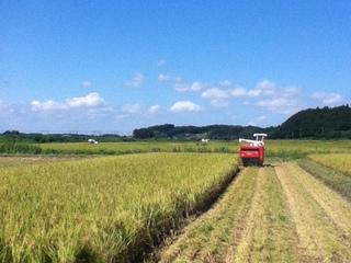 千葉県四街道にお米を育てる農業法人を作ります!!