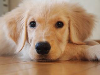 保護犬・猫が新しい飼い主と出会える新しい仕組みをつくりたい!