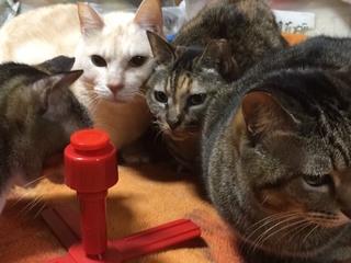 独居高齢者におき去りにされてしまった猫たちの命を救いたい
