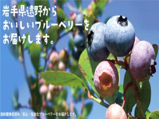 5000本のブルーベリーの木を守れ!岩手の獣害対策プロジェクト!