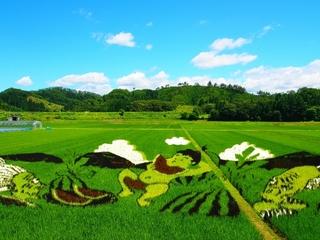 山形県尾花沢市福原地区でスイカの田んぼアートを製作したい!