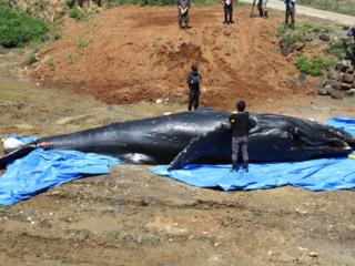 九州沿岸で、漂着したイルカ・クジラの調査を続けたい!