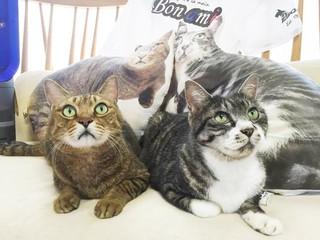 愛猫家に捧ぐ!猫とあなたに癒しのセラピーグッズを届けたい!