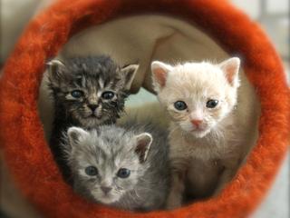 保護された猫が新しい家族と出会えるカフェを作りたい!