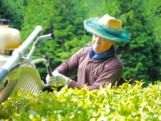 京都府宇治茶の産地で、若手農家が自然農法のお茶づくりに挑戦!