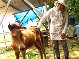 保護馬の奇跡!生まれた子馬のためにも安全な環境をつくりたい!