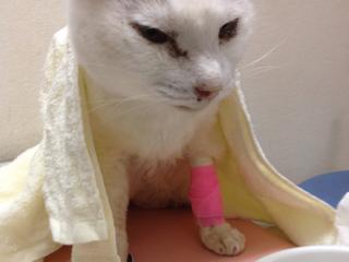 増える高齢者による多頭飼育崩壊や飼育放棄された猫を救いたい!