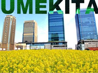 大阪うめきたに3万本の菜の花を!与謝蕪村が愛した自然の復活へ