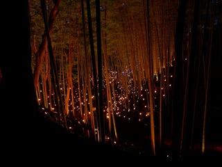 栃木県で北関東最大級の竹あかりイベント開催し那須町をPRしたい