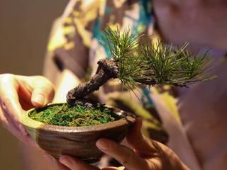 枯れた名品を盆栽アートで蘇らせ盆栽文化を社会貢献につなげたい
