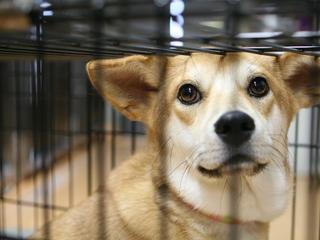 犬猫を保護した際、病気伝染を防ぐ為の隔離室を緊急設置したい!