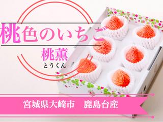 """桃色のイチゴ """"桃薫"""" を愛する宮城から全国の皆様へ届けたい!"""