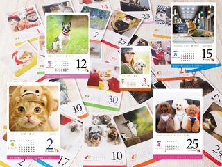 猫・犬の写真を365枚集めて、日めくりカレンダーを作成したい!