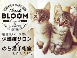 不幸な命を増やさない!福島に保護猫サロンとのら猫手術病院を!