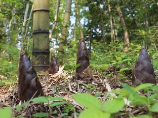松島町の里山、荒廃した竹林を整備し筍の里として地域活性化を!