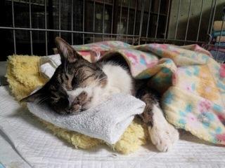 猫180匹が暮らす施設を危険な山奥から安全な場所へ移転したい!