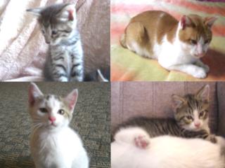 埼玉県秩父の野良猫50匹の不妊治療手術で不幸な猫を減らしたい!