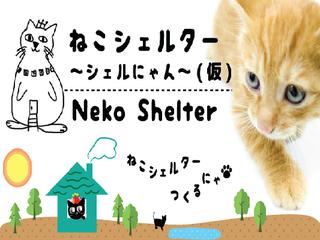 岐阜県の猫殺処分を0に!駅から徒歩5分の総合保護猫施設を開設!