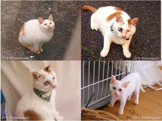大阪北部の野良猫のために猫舎「しっぽ天使のおうち」を建てたい