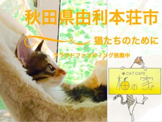 """秋田県由利本荘市の""""猫カフェ柚の家""""の猫たちの治療費を集めたい"""
