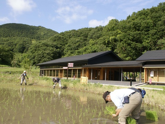 茨城の棚田米で地酒づくり!参加することで支える遊休農地活用!