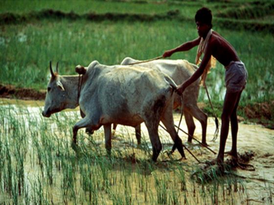バングラデシュに農業革命を!最高の教育を農家たちにも届けよう