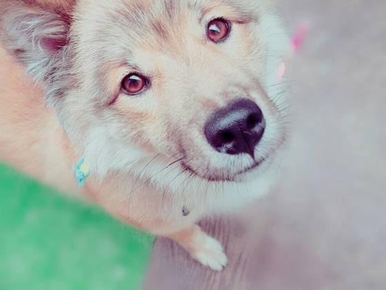 殺処分ワースト4位の愛媛県で保護犬シェルターをつくりたい!
