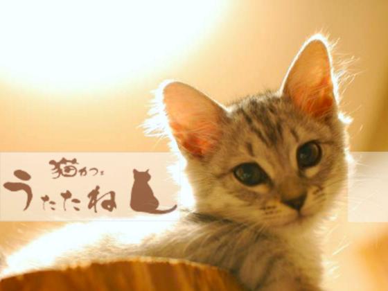 猫が「ひなたぼっこ」できる温かい保護猫カフェに改装したい!