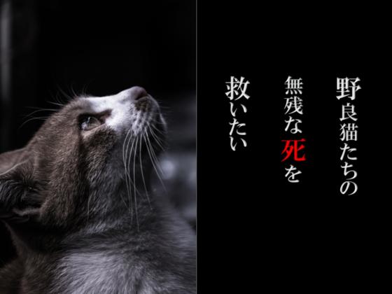 小さくても命!野良猫たちの不妊手術と子猫の治療をしたい!