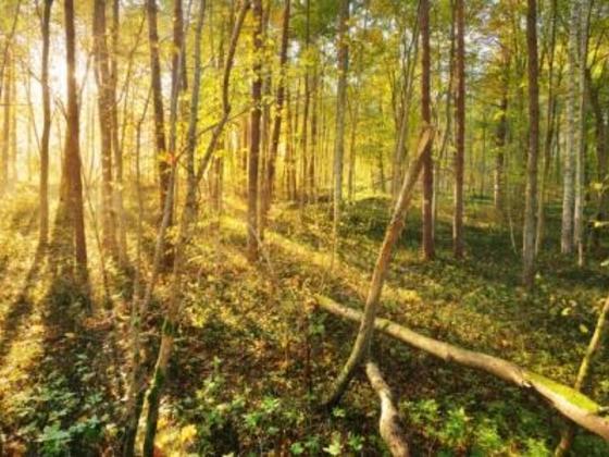 障がい児と家族のための多感覚演劇「森の物語」開幕へ!
