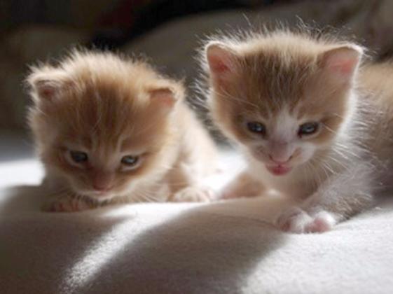 虐待を受けたり怪我や病気の野良猫達、捨てられた猫達を救いたい