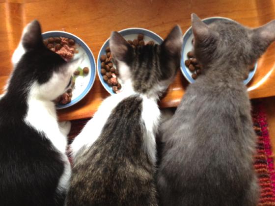 埼玉県坂戸市で飼い主のいない猫のシェルターの治療を続けたい!