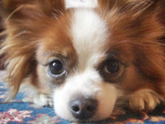 保護犬の「預かり施設」を、犬と人が自然に触れ合える環境に!