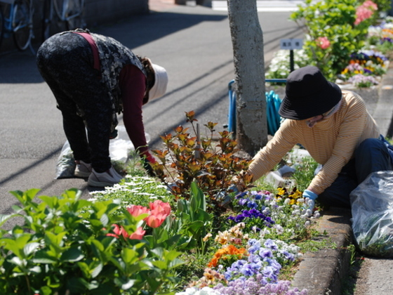 平均年齢70歳!私たちで地元宮崎にチューリップ3万本咲かせたい!