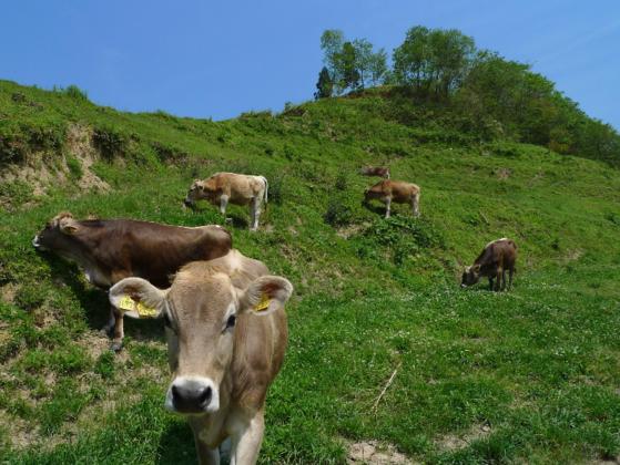 島根県奥出雲町にある〈ダムの見える牧場〉を皆が笑顔の牧場へ!