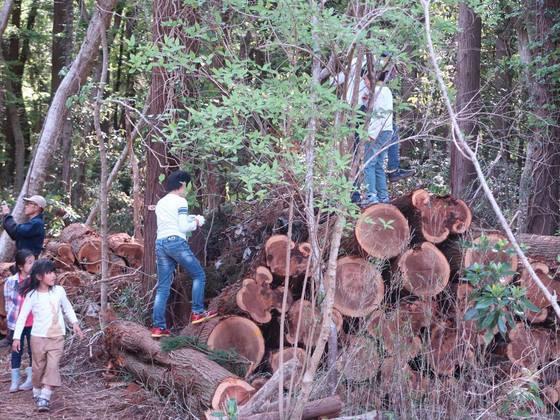 """"""" 木育 """"を通じて荒れた森を子どもたちと一緒に復活させたい!"""