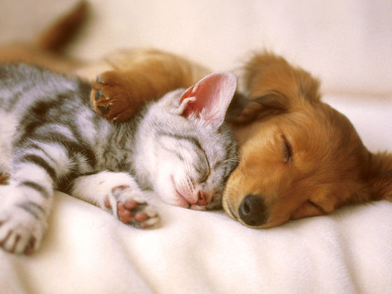 熊本県の犬猫殺処分ゼロ実現へ。動物の福祉施設をOPENしたい!