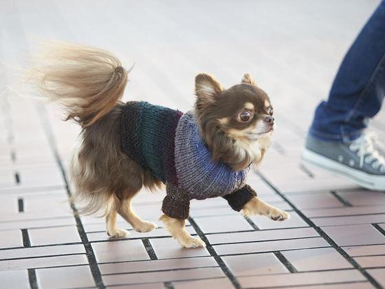 完全オーダーメイドの手編みセーターを、あなたの愛犬にも。