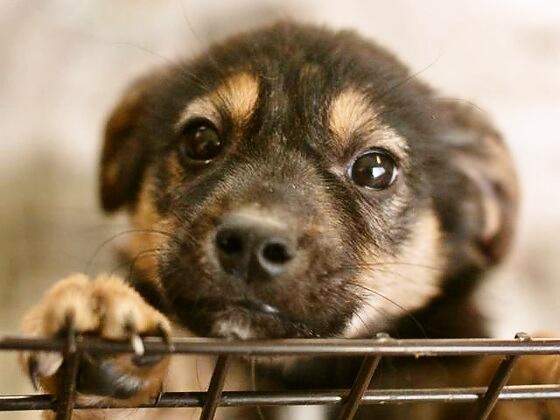 ドッグウォーキングイベントで1匹でも多くの捨て犬を救いたい!