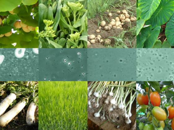 天国の野菜が持つ幸せになるチカラを証明し、世界中に届けたい!