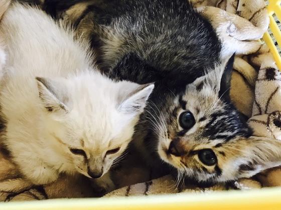 長野県一の殺処分数。飯田市で、1匹でも多くの猫の命を救いたい