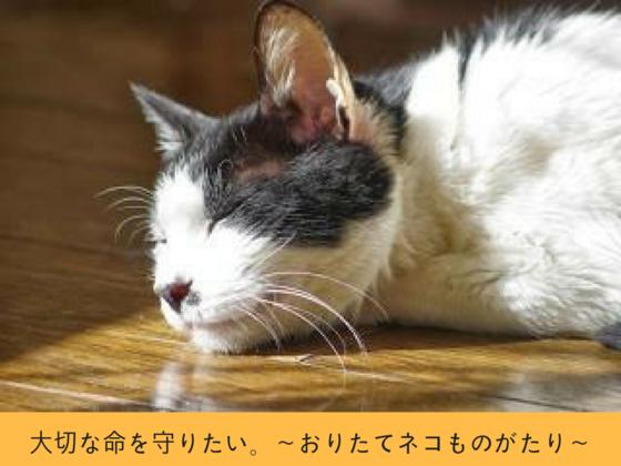 保護猫80匹に健康診断を受けさせ、一匹でも無駄な死を防ぎたい。