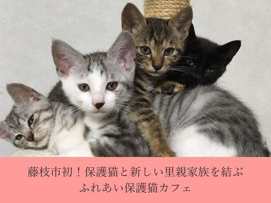 藤枝市初!保護猫と新しい里親家族を結ぶ、ふれあい保護猫カフェ