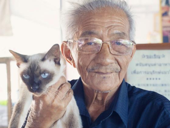 タイバンコク発 稀少シャム猫と猫の家の75年の歴史を守りたい。