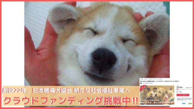 聴導犬・介助犬に貢献した犬たちの「供養メモリアル」を創りたい