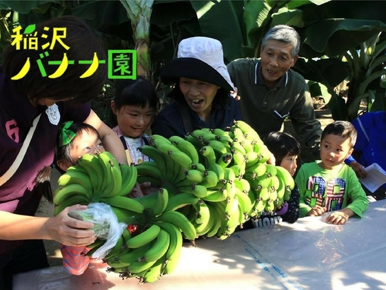 幼稚園の園庭にバナナ苗を植えて、収穫体験会を開催したい!
